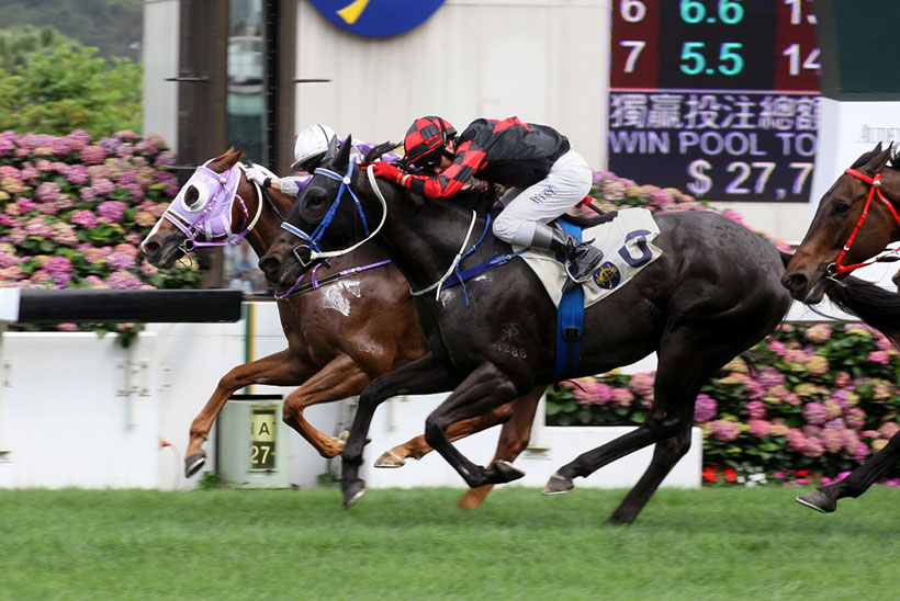 Hong Kong Horse Racing – Origins and the modern era tracks